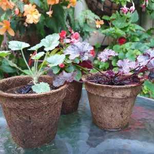 coir pots 9cm group