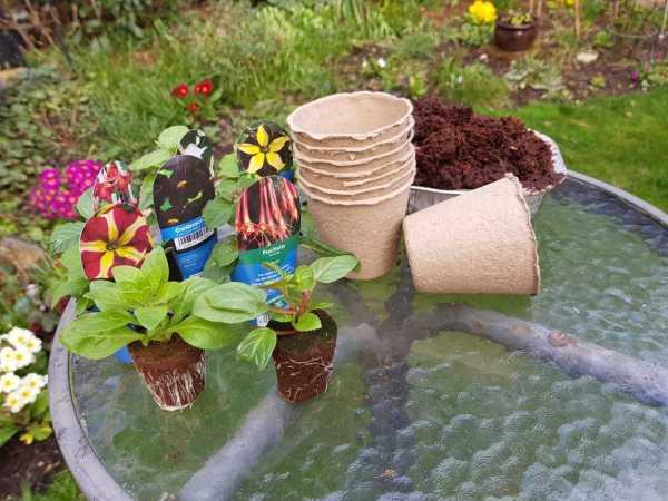 potting up plug plants with coir