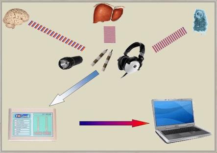 Analyse et comparaison fréquences