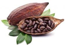 Afrodiziakum kakao
