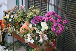 Грижи за цветя на балкона по време на карантина