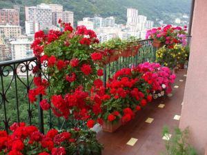 Грижи за цветя на балкона