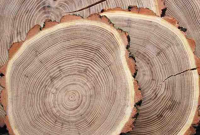 Твърдост на дървесината