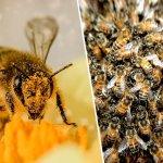 500 εκατομμύρια μέλισσες πέθαναν τους τελευταίους 3 μήνες στην Βραζιλία
