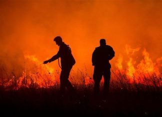 EFFIS: κάηκαν πάνω από ένα εκατομμύριο στρέμματα σε δύο εβδομάδες