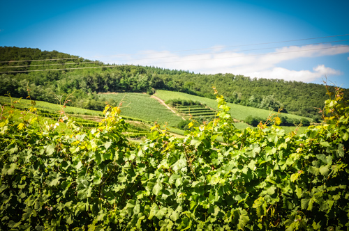 The Chablis region is the northernmost wine district of the Burgundy region in France