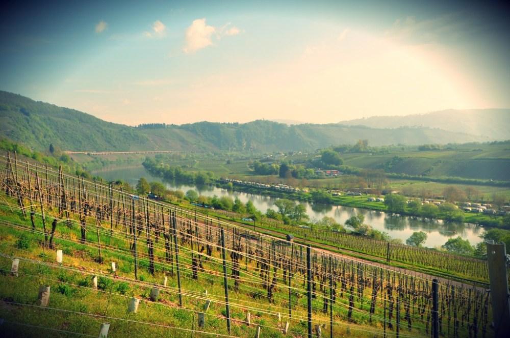 Moselle River vineyards