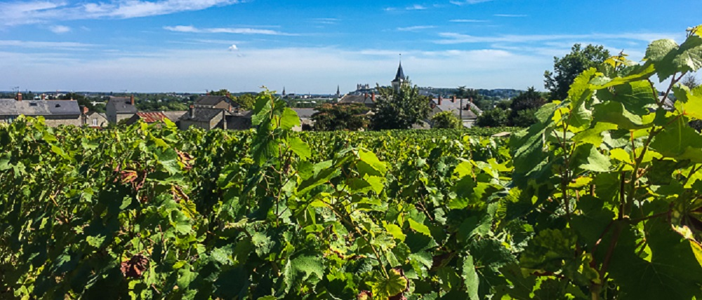 france-loire-wines