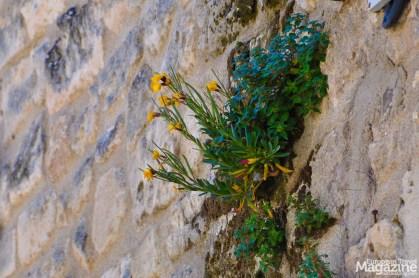 Baux-de-Provence-10