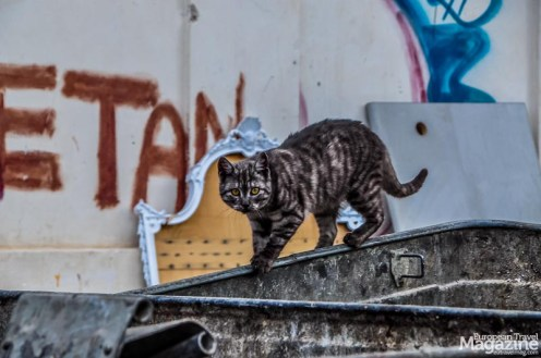 Stray cat scavenging the dumpsters at Ballarò Street Market
