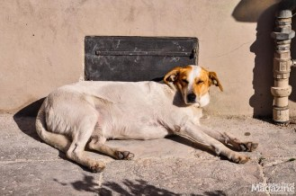 Stray dog catching a nap in a sunbeam