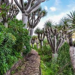 Walk among Dragon Blood trees and huge cactuses..