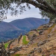 Wine has been produced by traditional landholders in the Alto Douro Region for some 2.000 years