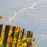 Although the Douro is much more than just Port wine, it ought to be an important part of a visit, since it defines this region so much – both historically, culturally and rurally.
