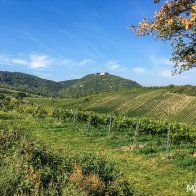 A popular day outing during the weekends is a walk along the vineyards, from Heuriger to Heuriger