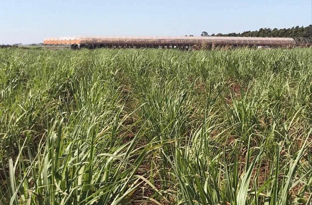 Primeira biofábrica de MPB de cana-de-açúcar do Brasil