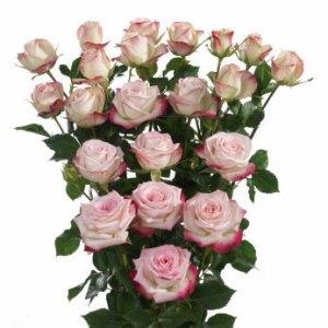 Premium Spray Roses