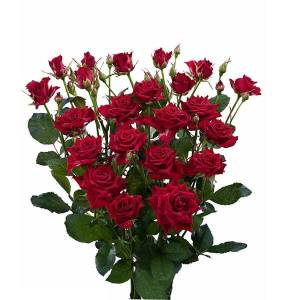 Supermarket Range Spray Roses