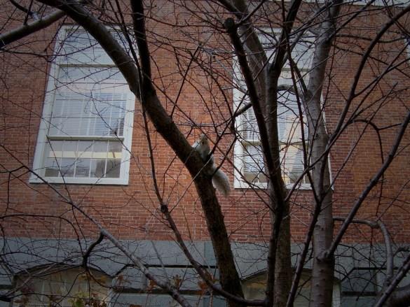 Scoiattolo-Boston-usa-america-squirrel