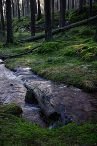Skogsbäcken