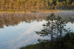 Skogssjö i morgonljus
