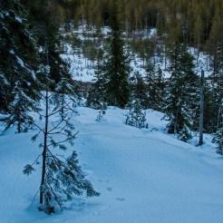 Solnedgång. en räv har gått i snön och en and skrattar från bäcken nedanför