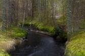 Stilla skogsbäcken inbjuder att sitta och vila