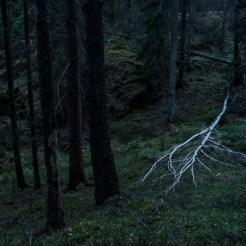 Trädskelett
