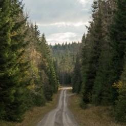 Hög skog utmed vägen