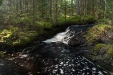 Flödande skogsbäck