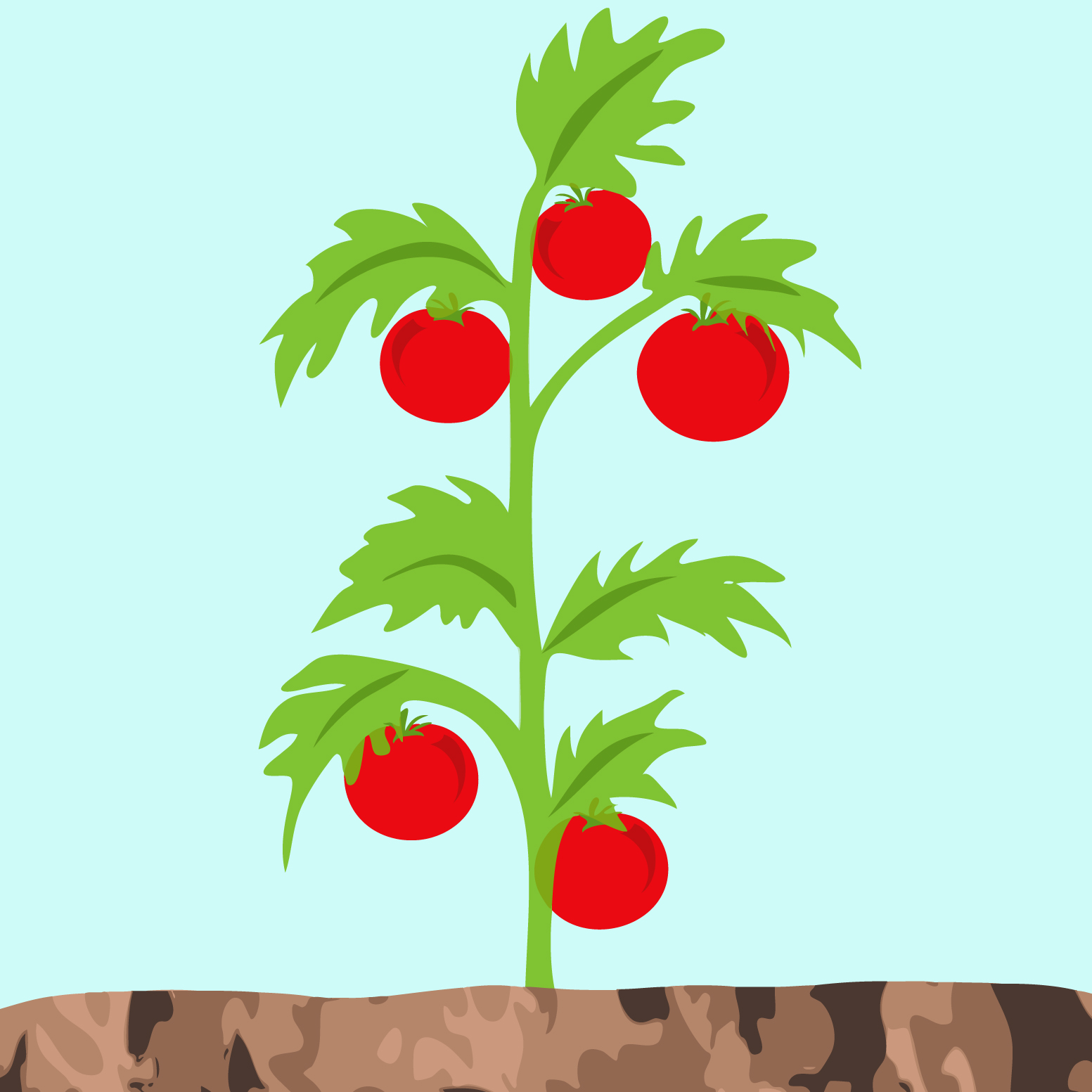 Early Learning Resources Tomato Plant