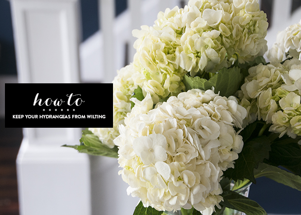 prevent hydrangeas from drooping