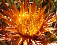 closeup of golden flower