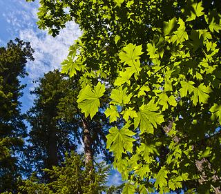 leafy green tree against blue sky
