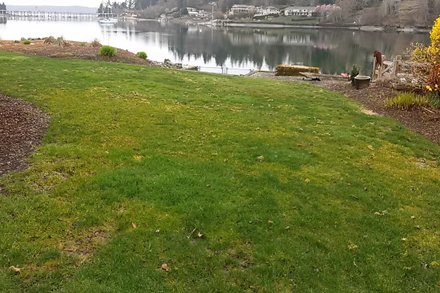 Want A Great Lawn Stop Using Iron The Moss Vs Grass Fight