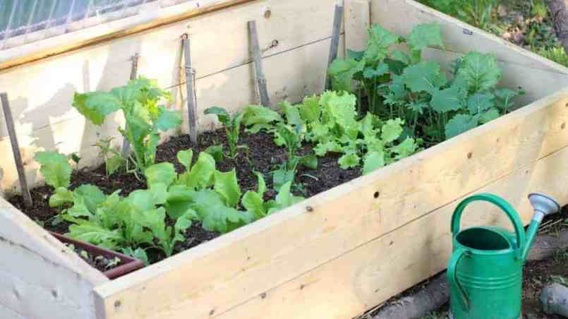 There are many benefits to gardening in a cold frame in cooler climates. Learn what a cold frame is, how it will benefit your garden, and what to grow in one to increase your vegetable harvest.