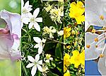 hh five flower photo