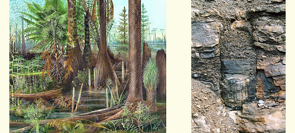 Artist's rendition of earliest trees (left), fossil evidence of early tree (right)