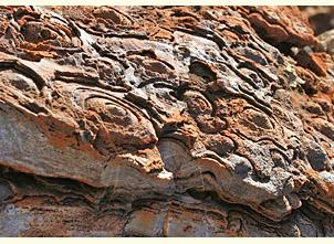 Strelley Pool stromatolites