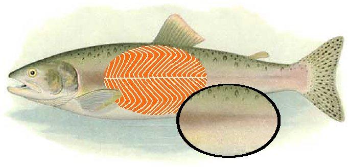 https://i1.wp.com/www.earthlife.net/fish/images/salmon.jpg