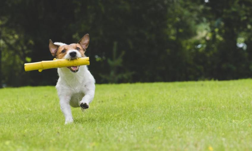 exercise with your dog