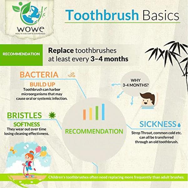 Toothbush Basics