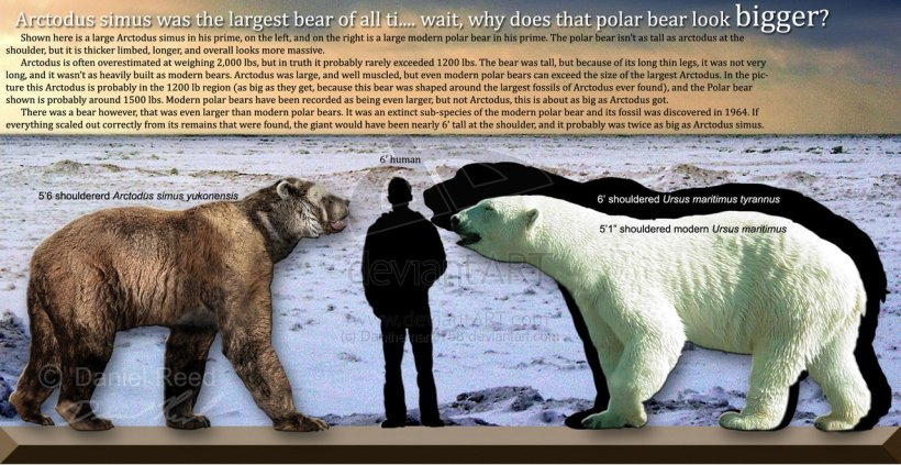 biggest-bears-polar-infographics_1