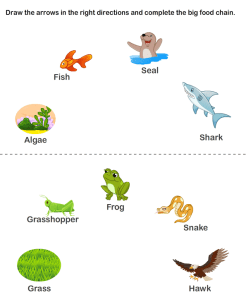 food chain pyramid