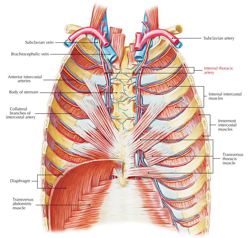 Long Thoracic Nerve Anatomy