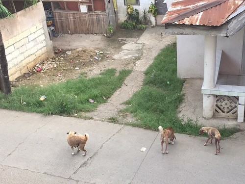 stray dogs are a reality you will encounter living in the philippines beyond the tourist zones