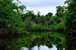 Panacocha_Reserve1084.jpg