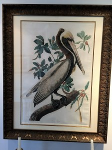 Audubon print - Audubon House, Key West, FL