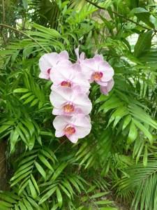 Orchid, Audubon House, Key West, FL