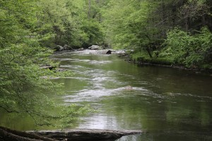 Tellico River - Cherokee National forest